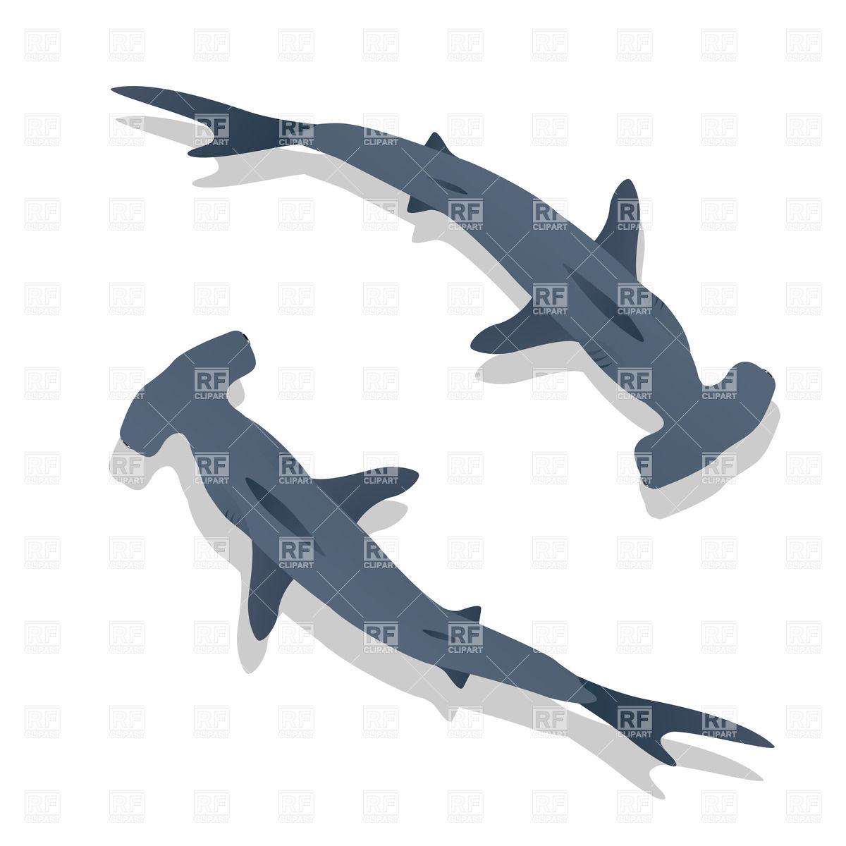 1200x1200 Species Of Shark