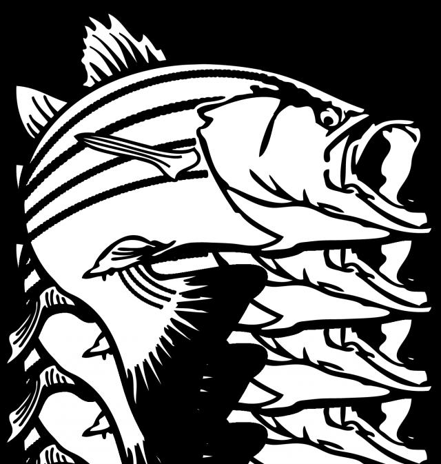 640x673 Salmon Fish Clip Art Bass Fish Pictures Clip Art Clipart Best