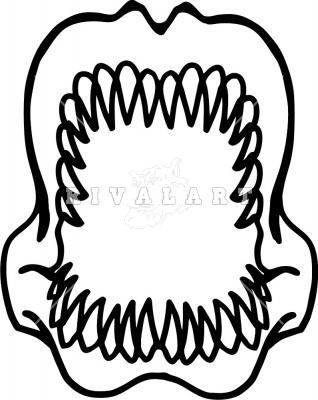 318x400 Megalodon Shark Tooth Clip Art Cliparts