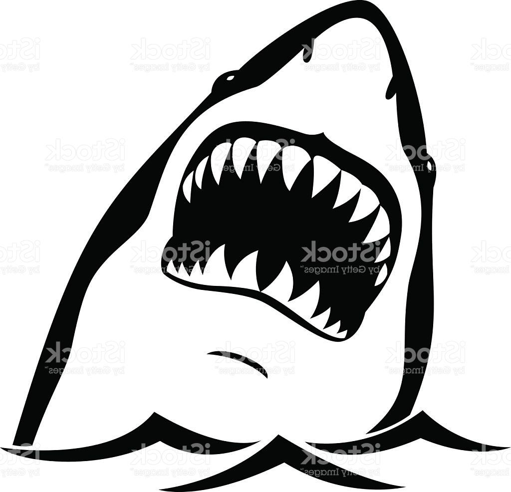 Shark Teeth Clipart Free Download Best Shark Teeth
