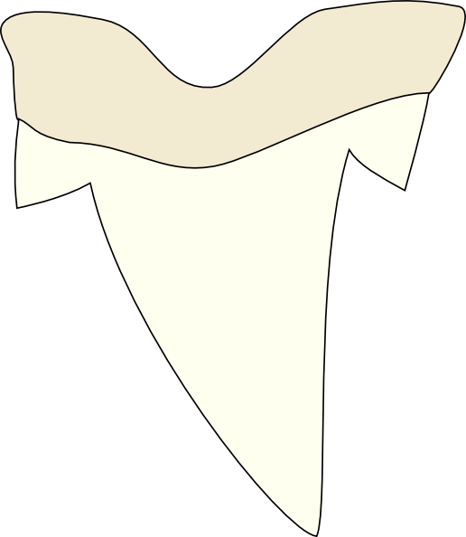 516x594 Shark Tooth Clip Art
