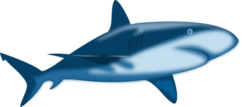 800x355 Shark Teeth Clipart Free Images 2