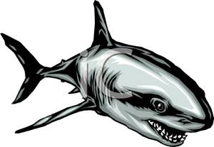 300x207 Art Image A Gray Shark With Sharp Teeth