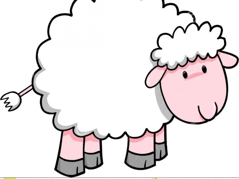 800x600 Sheep Clip Art