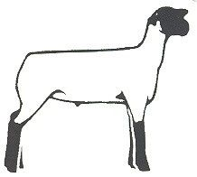 218x196 Sheep Showing Clipart