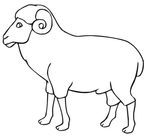 480x453 Ram Outline Coloring Page Free Printable Coloring Pages