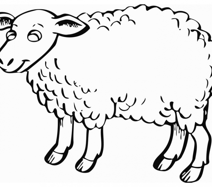 678x600 Sheep Outline Coloring