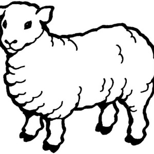 300x300 Drawing Sheep Outline Coloring Page Coloring Sky