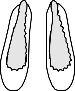 246x299 Flat Shoes Clip Art