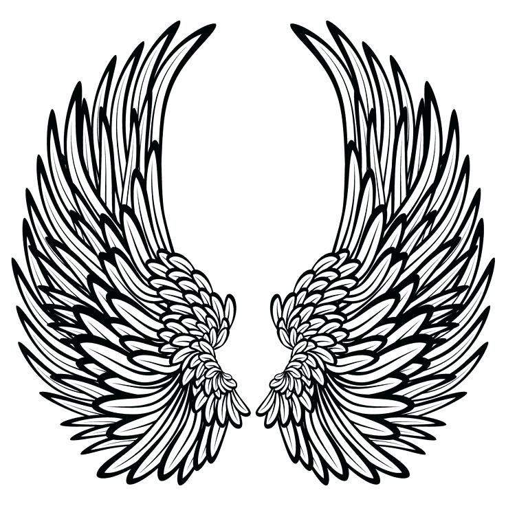 736x736 Angel Wings Pictures Color