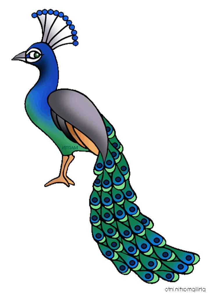 718x1012 Peacock Cliparts
