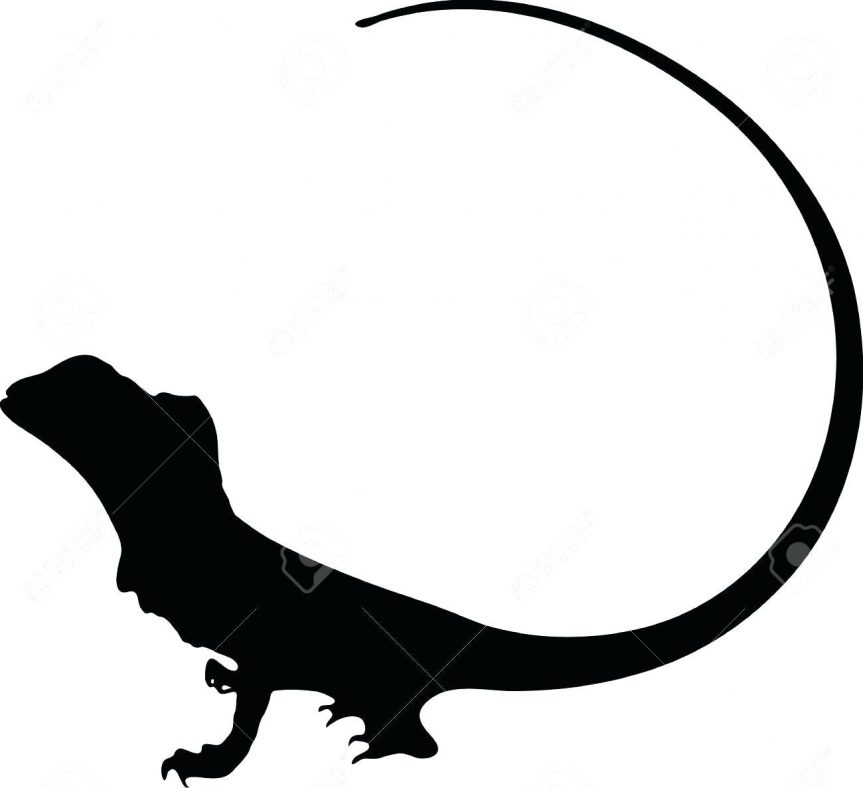 863x788 Vector Graphic Outline Of A Frilled Dragon Stock Koi Fish Drawing