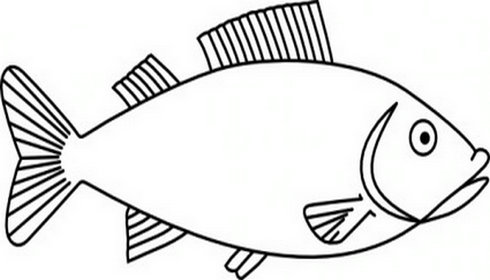 490x280 Outlines Of Fish