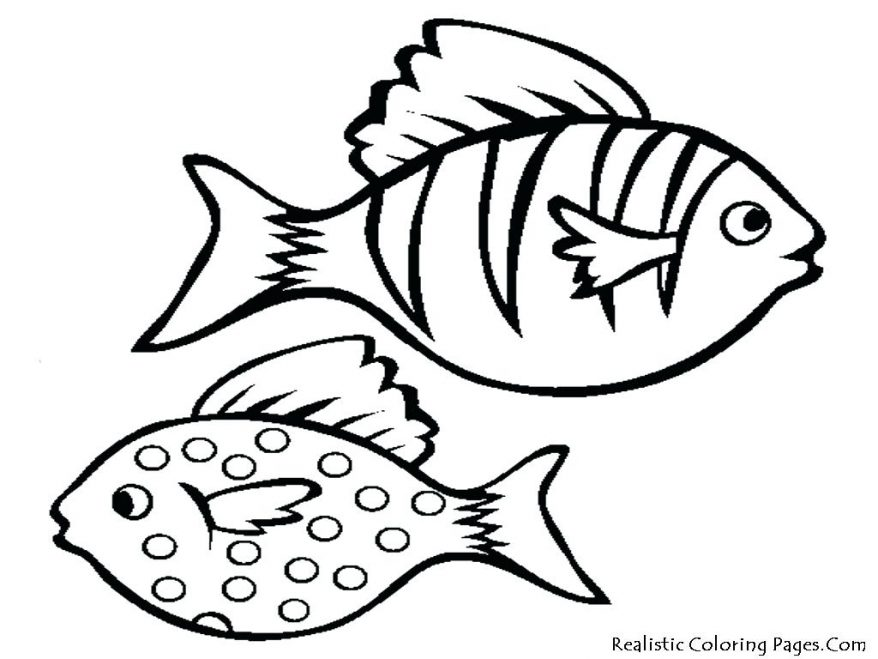 878x659 Simple Drawing Of Fish All New How To Draw Food A 25 Fascinating