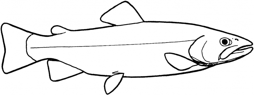 1024x385 Simple Drawing Of Fish Simple Fish Outline Clipartsco