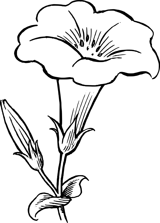 1871x2618 White Flower Clipart Flowe