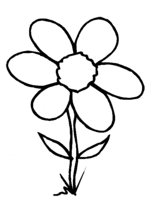 540x702 White Flower Clipart Flower Coloring