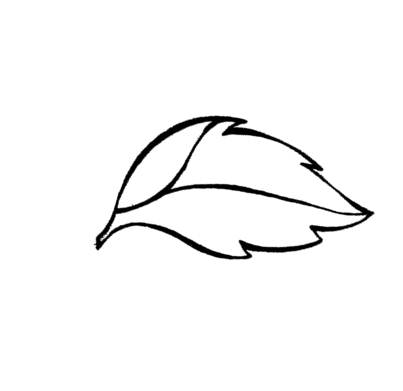 403x391 Simple Leaf Outline Clipart