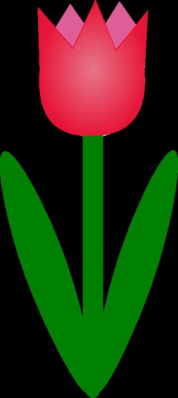 359x800 Top 76 Tulip Flower Clip Art
