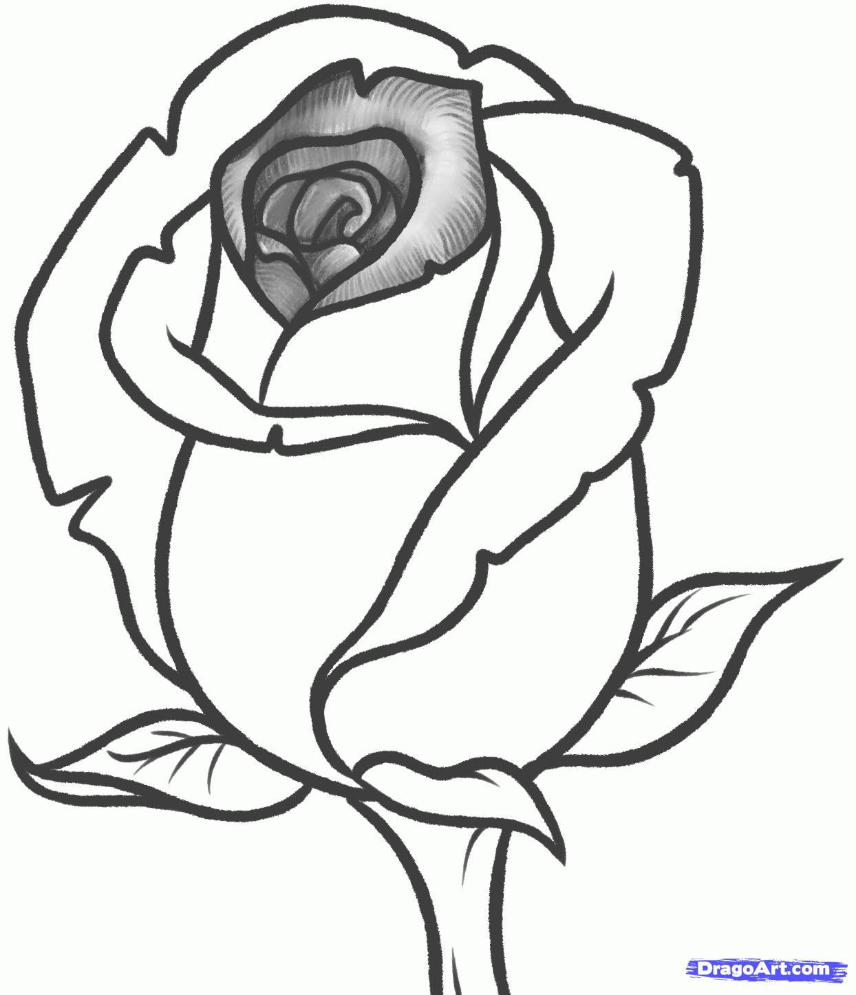 1244x1446 Drawings Roses