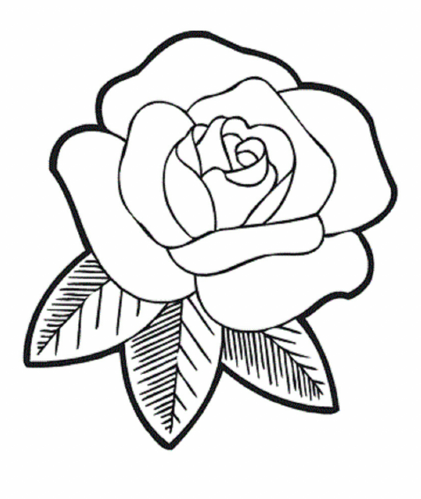 864x1024 Coloring Pages Delightful A Simple Rose Drawing Flower How