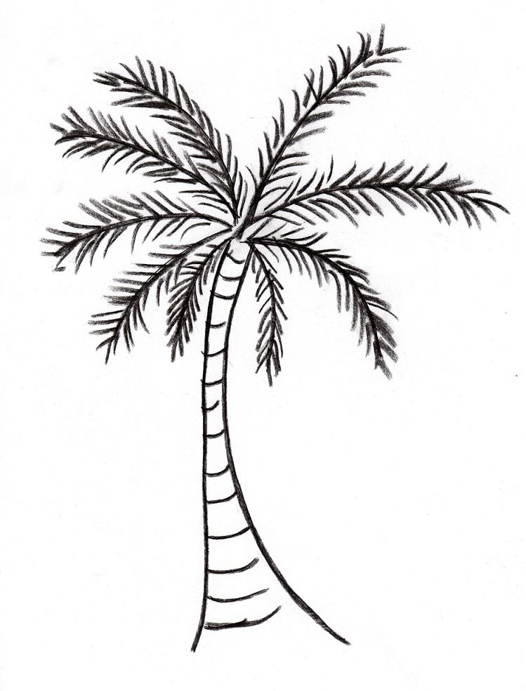 749x984 Palm Tree Drawing