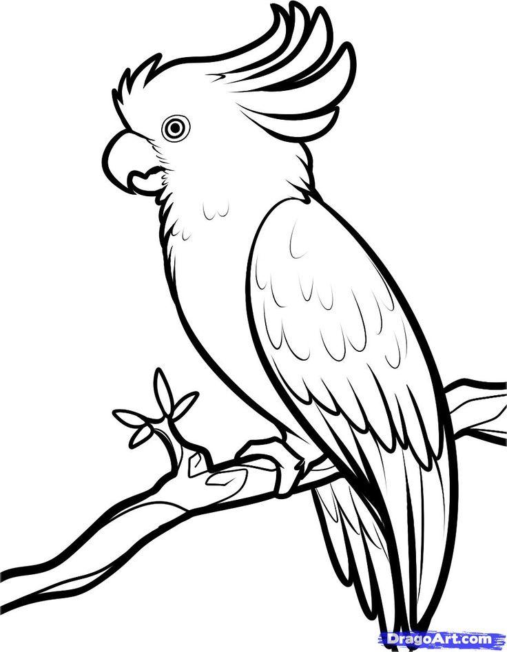 736x947 Bird Drawing Simple