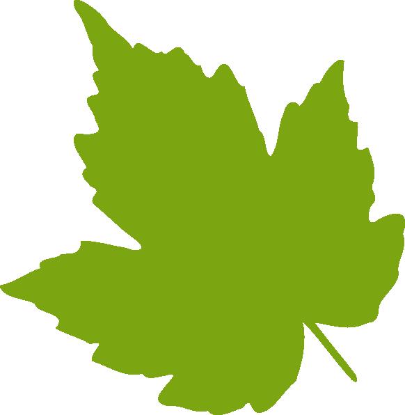 582x596 Single Leaf Clipart