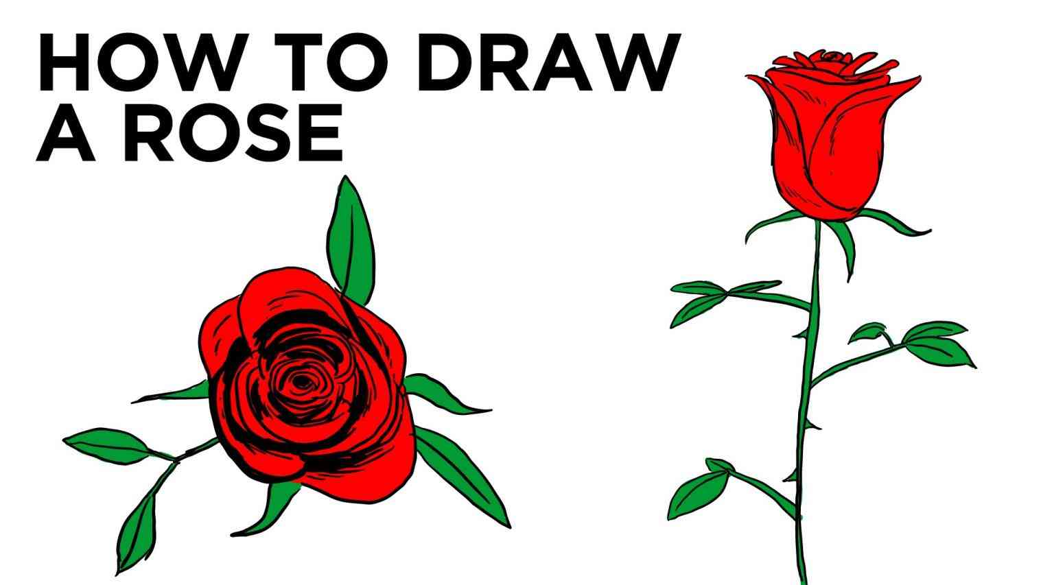 1517x853 Red Rose With Stem Drawing Simple Rose Drawing Images Single Red