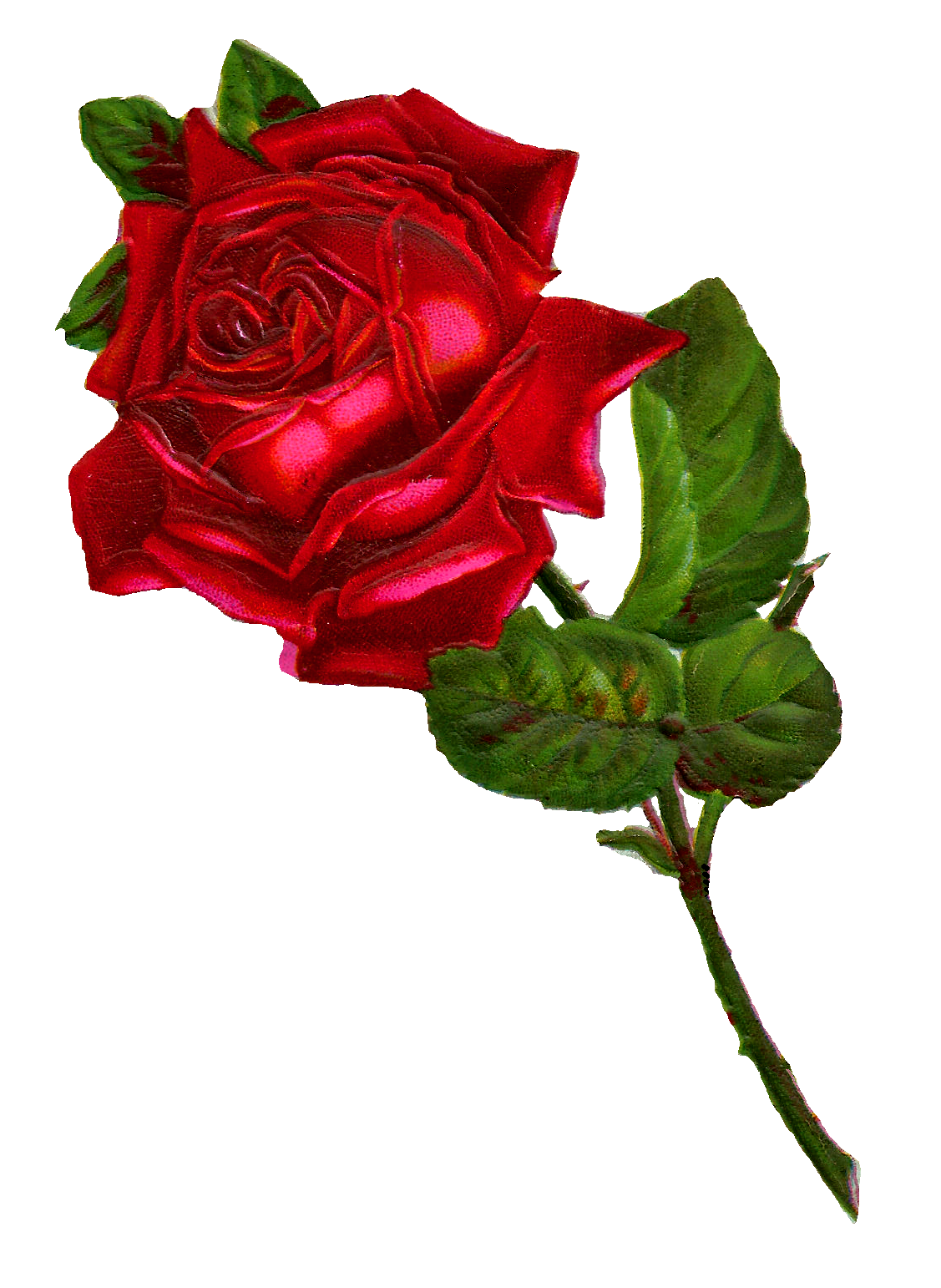 1127x1542 Antique Images Stock Red Rose Digital Clip Art