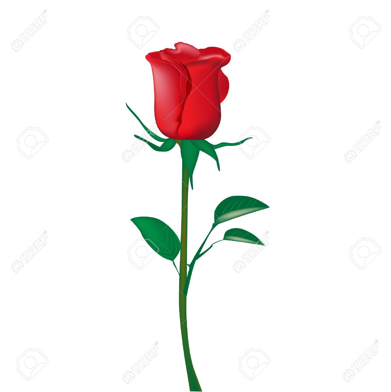 1294x1300 Single Red Rose Isolated On White Royalty Free Cliparts, Vectors
