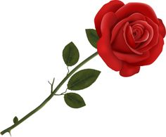 236x195 Single Red Rose Png Clipart Image Roses Single Red