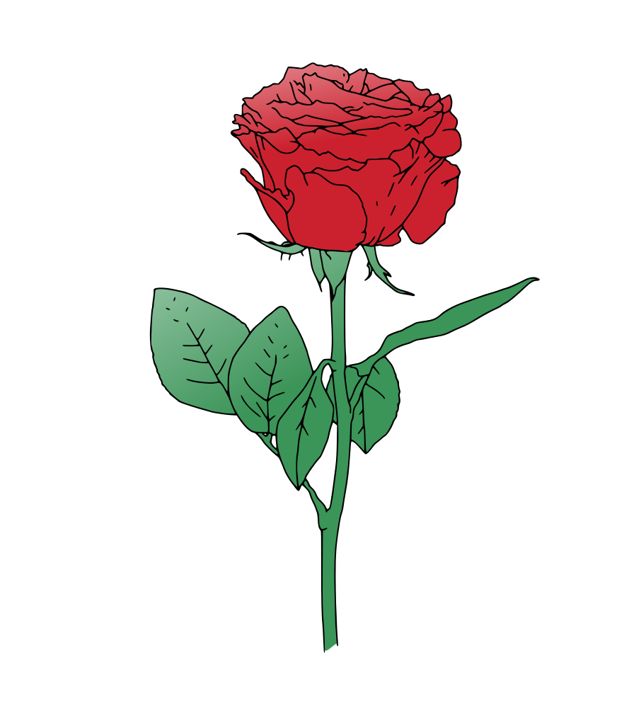 906x1000 Single Red Rose Vector