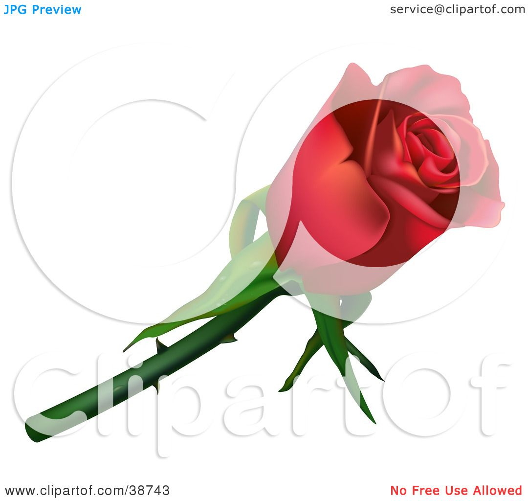 1080x1024 Clipart Illustration Of A Single Red Rose With Thorns By Dero