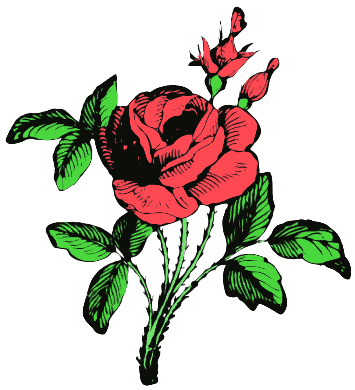 355x390 Free Roses Clipart
