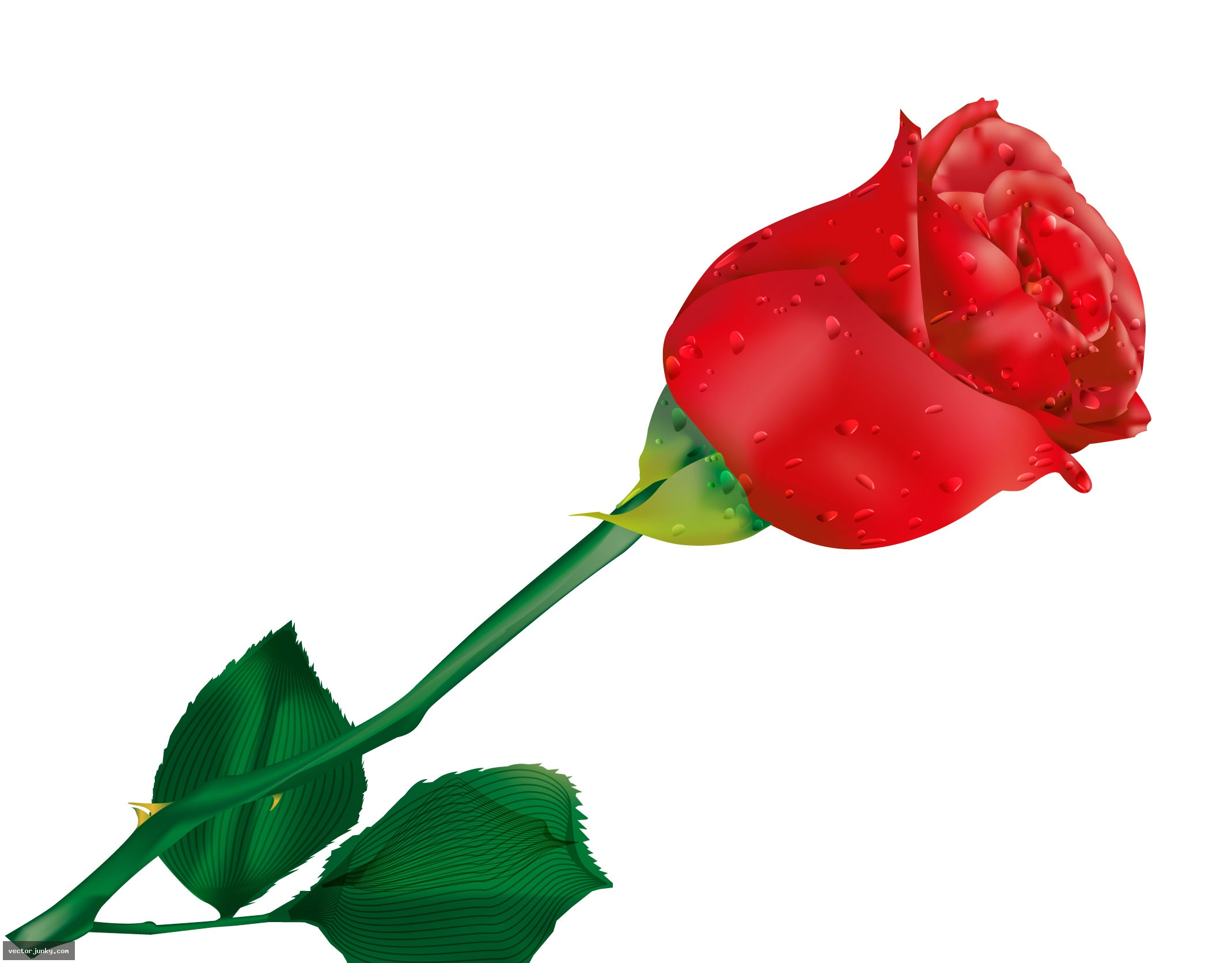 2139x1671 Long Clipart Red Rose