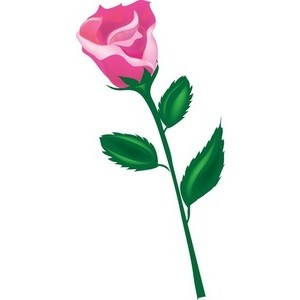 300x300 Long Stem Rose Clipart