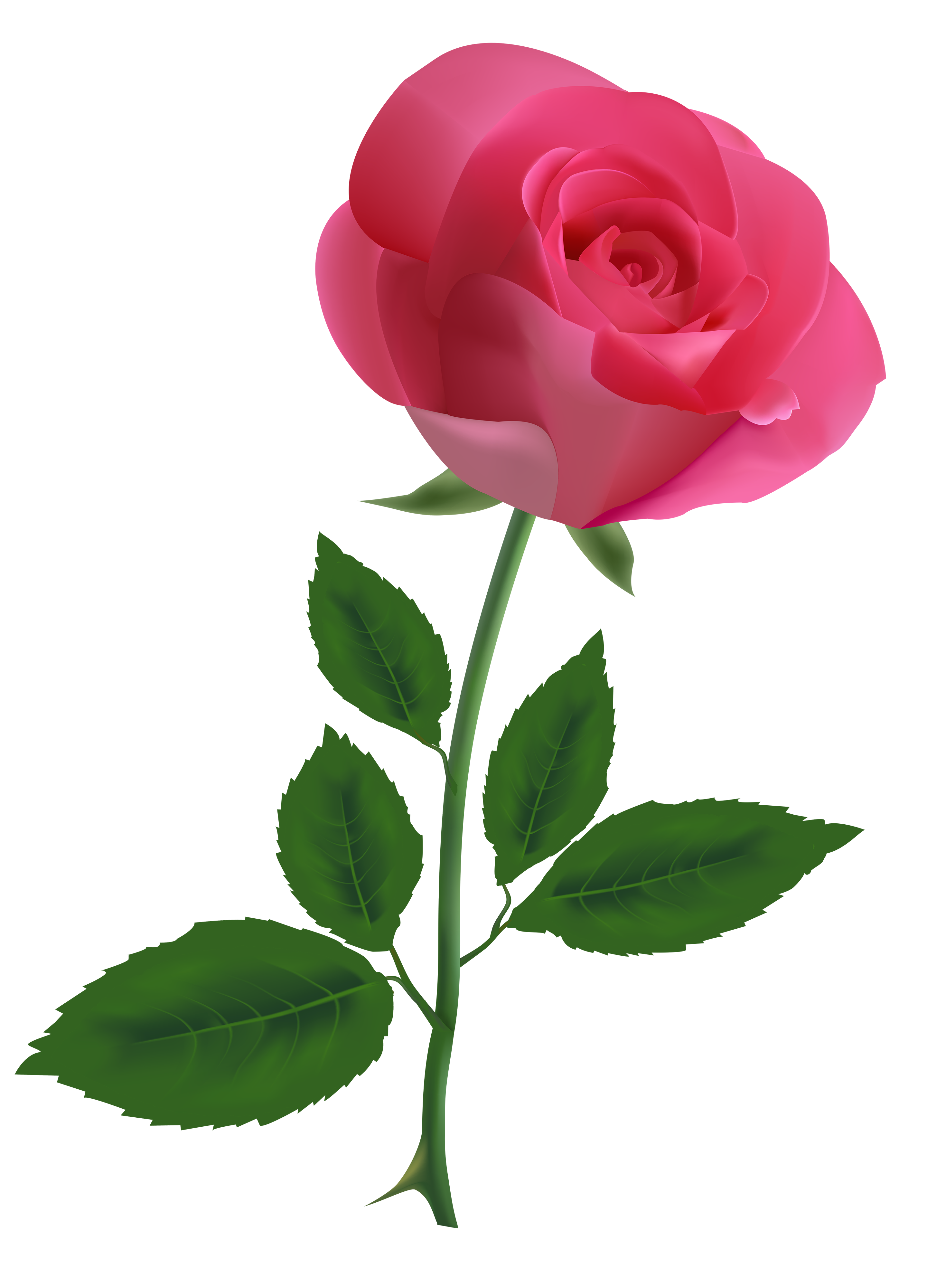 2880x4000 Pink Rose Clipart Png Image