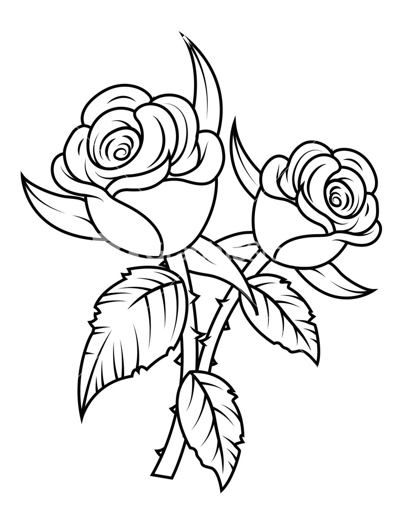 801x1000 Rose Bud Clipart Black And White
