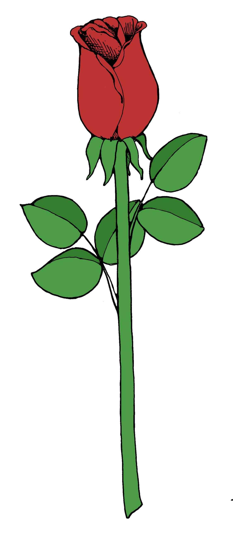 1125x2585 Single Black Rose Drawings Urldircom