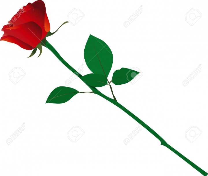 720x609 Single Red Rose Clipart Images In Stem Red Rose Png Clipart Stem