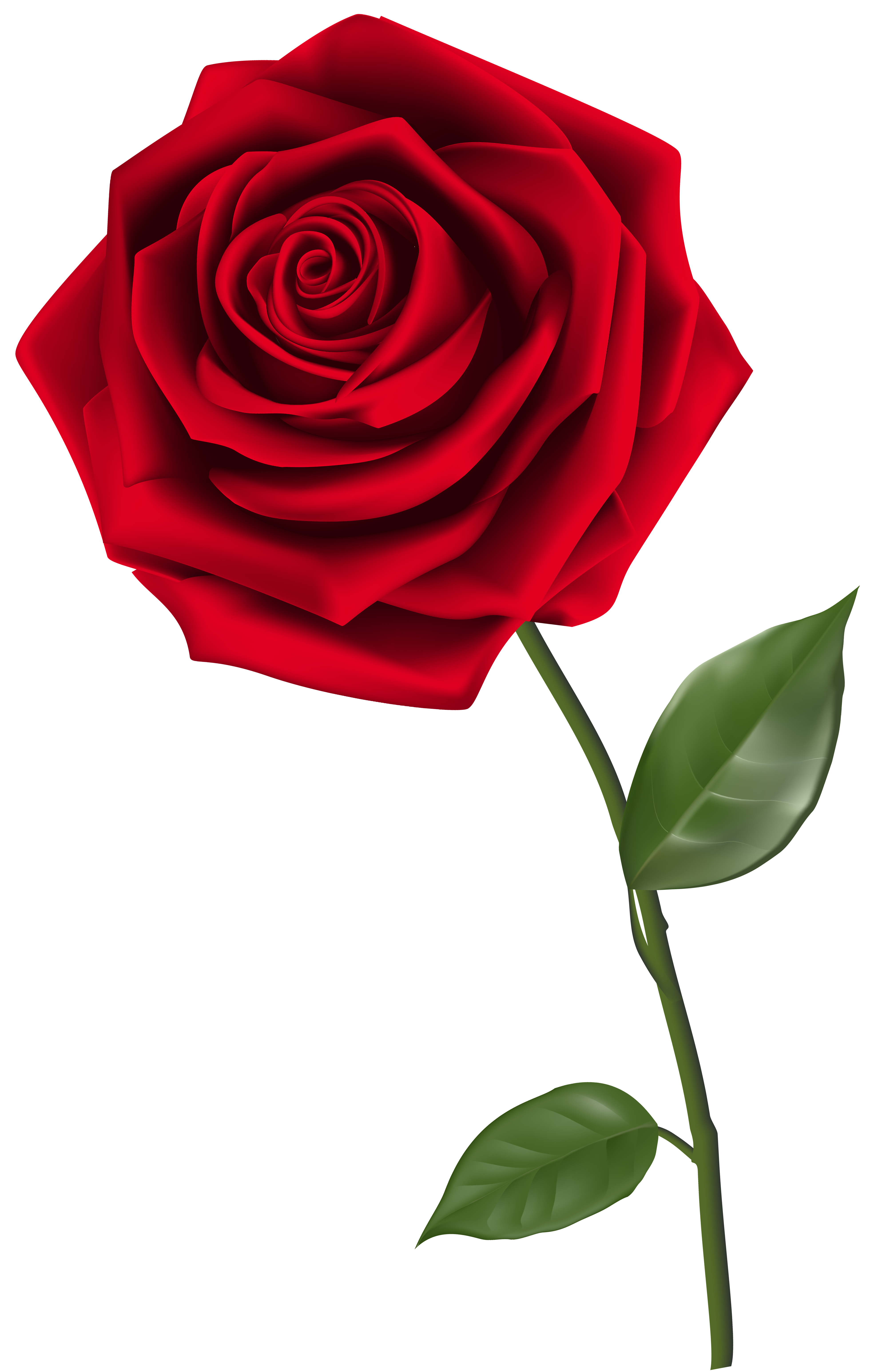 4026x6181 Single Red Rose Png Clipart Imageu200b Gallery Yopriceville