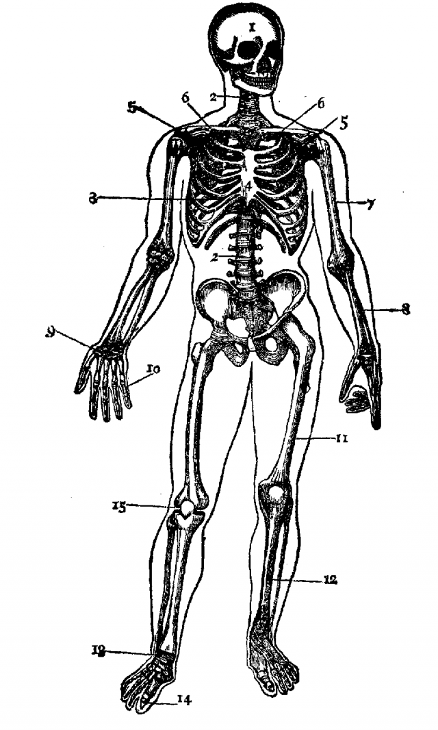 640x1066 Human Skeleton Coloring Page Many Interesting Cliparts