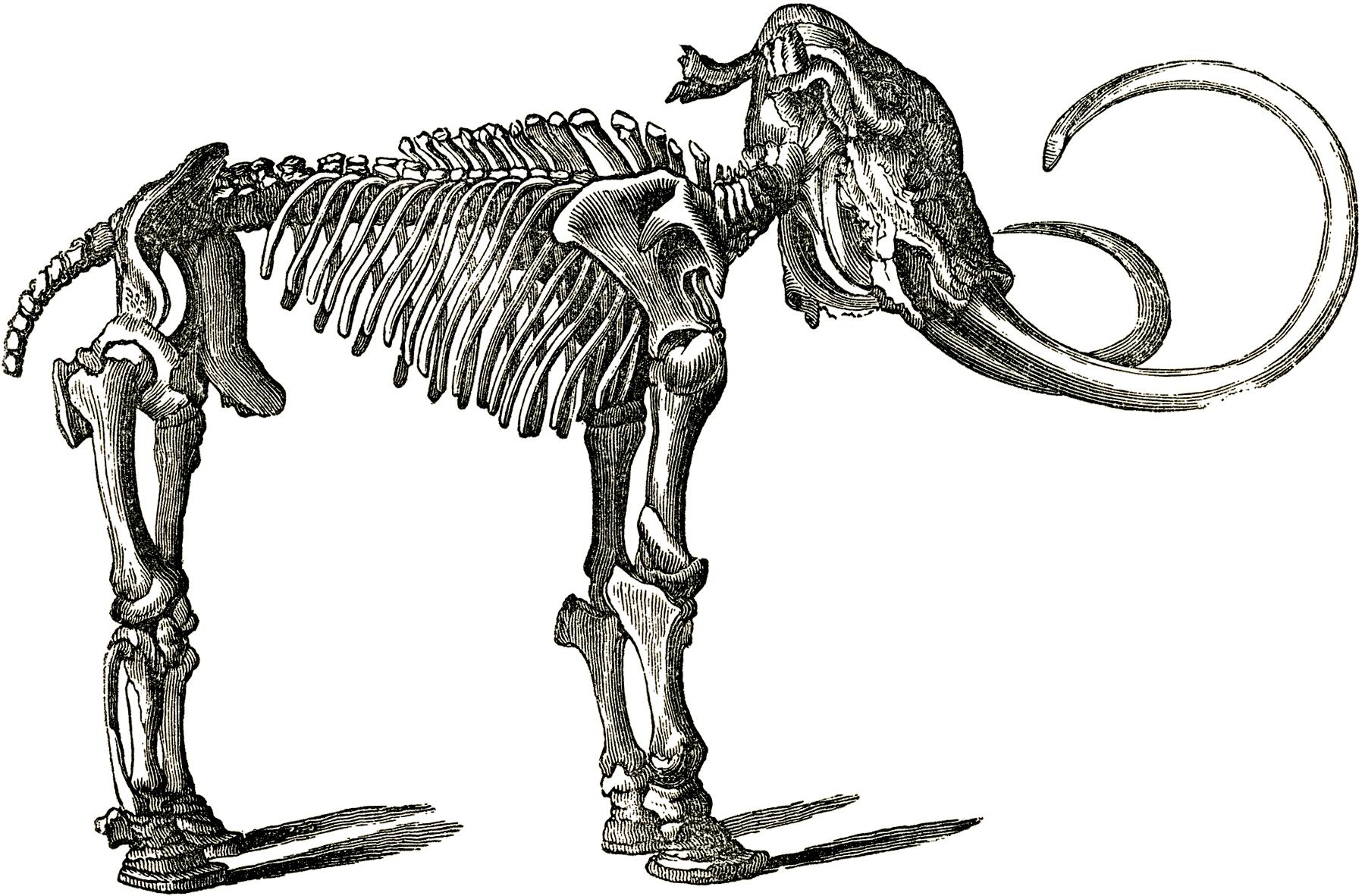 1800x1182 Skeleton Clipart