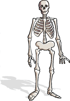 240x348 Skeletons Facts (Science Trek Idaho Public Television)
