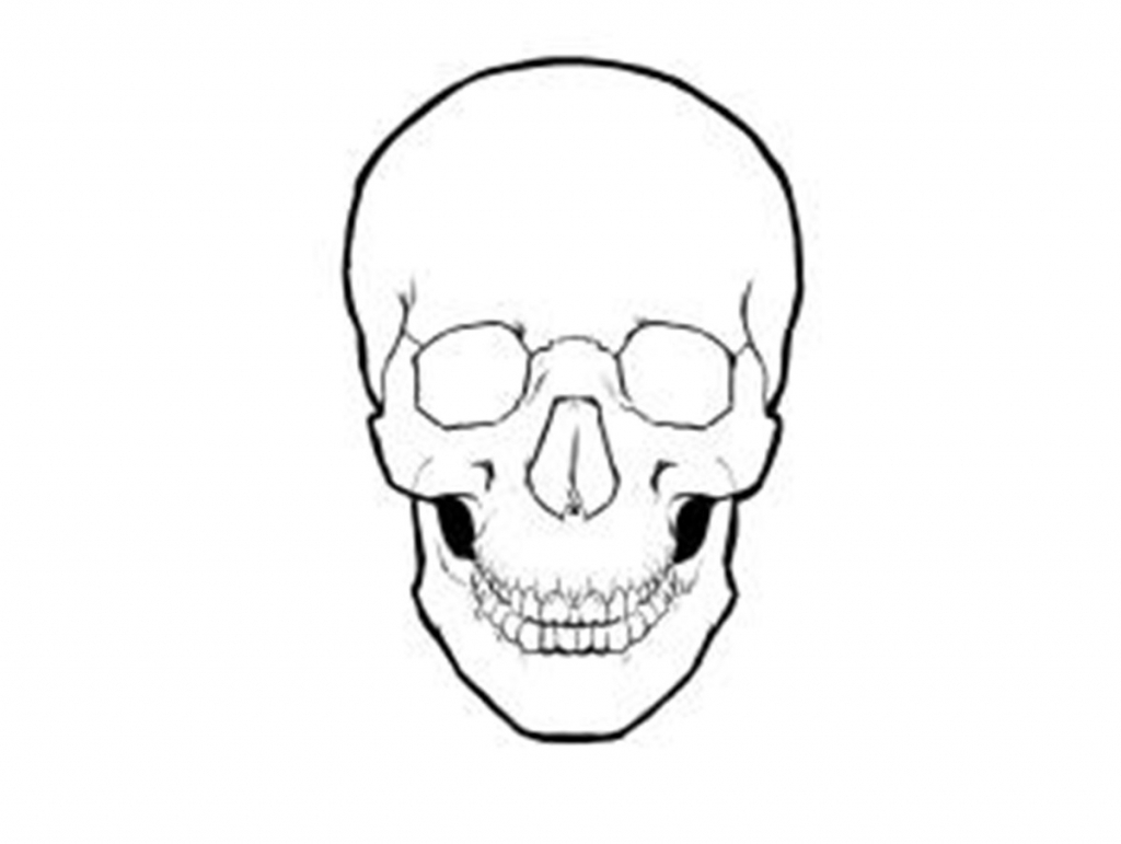 1024x771 Simple Skull Drawing Skull Drawing Best Images Collections Hd