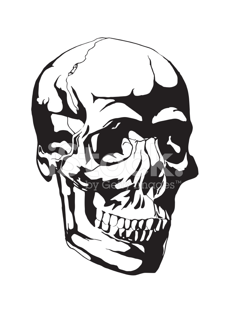 768x1024 Skull Anatomy Drawing Image Collections
