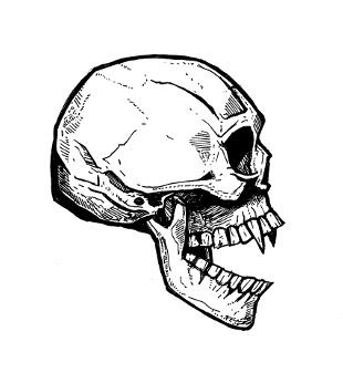 310x346 Skull Drawings