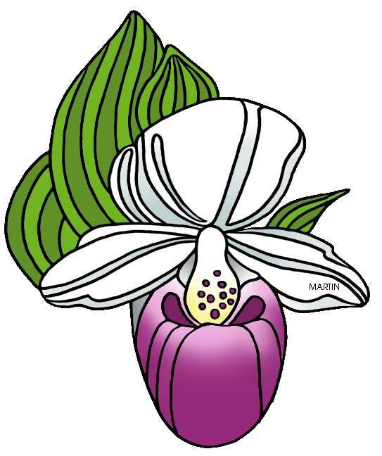 543x648 Lady Slipper Clip Art
