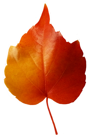 315x472 Fall Leaves Clip Art